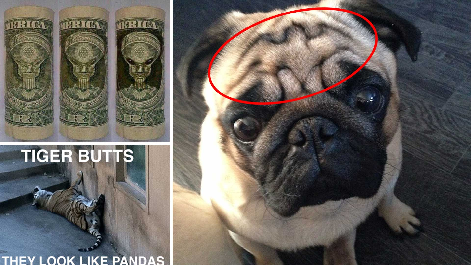 19 crazy things which you just can t unsee men s den
