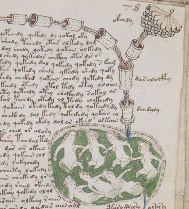 Voynich-manuscript (1)